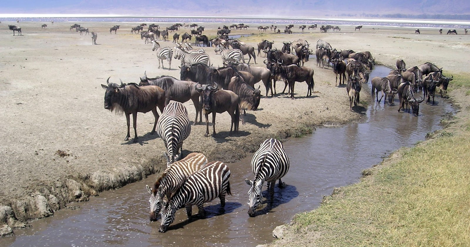 a journey in tanzania Information on what to pack and wear in tanzania for wildlife safari & beach travels also, review safari trip prices and tours for honeymooners, families and independent travelers, guest reviews, videos, maps and many more tour options.