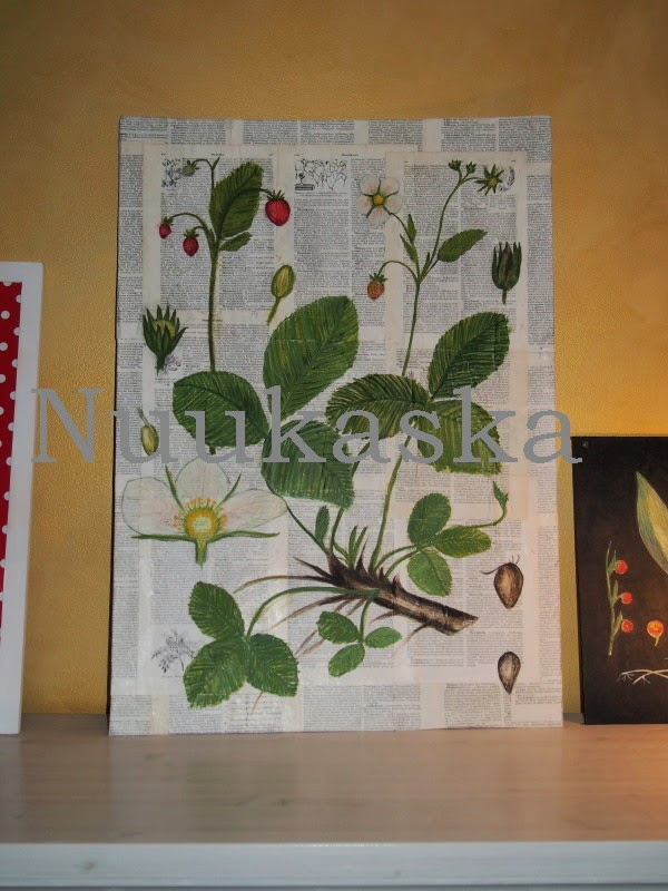 nuukaska mansikka opetustaulu strawberry botanical drawing