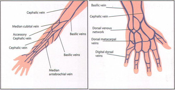 cannulation reflective | keep calm i'm a student paramedic, Cephalic Vein