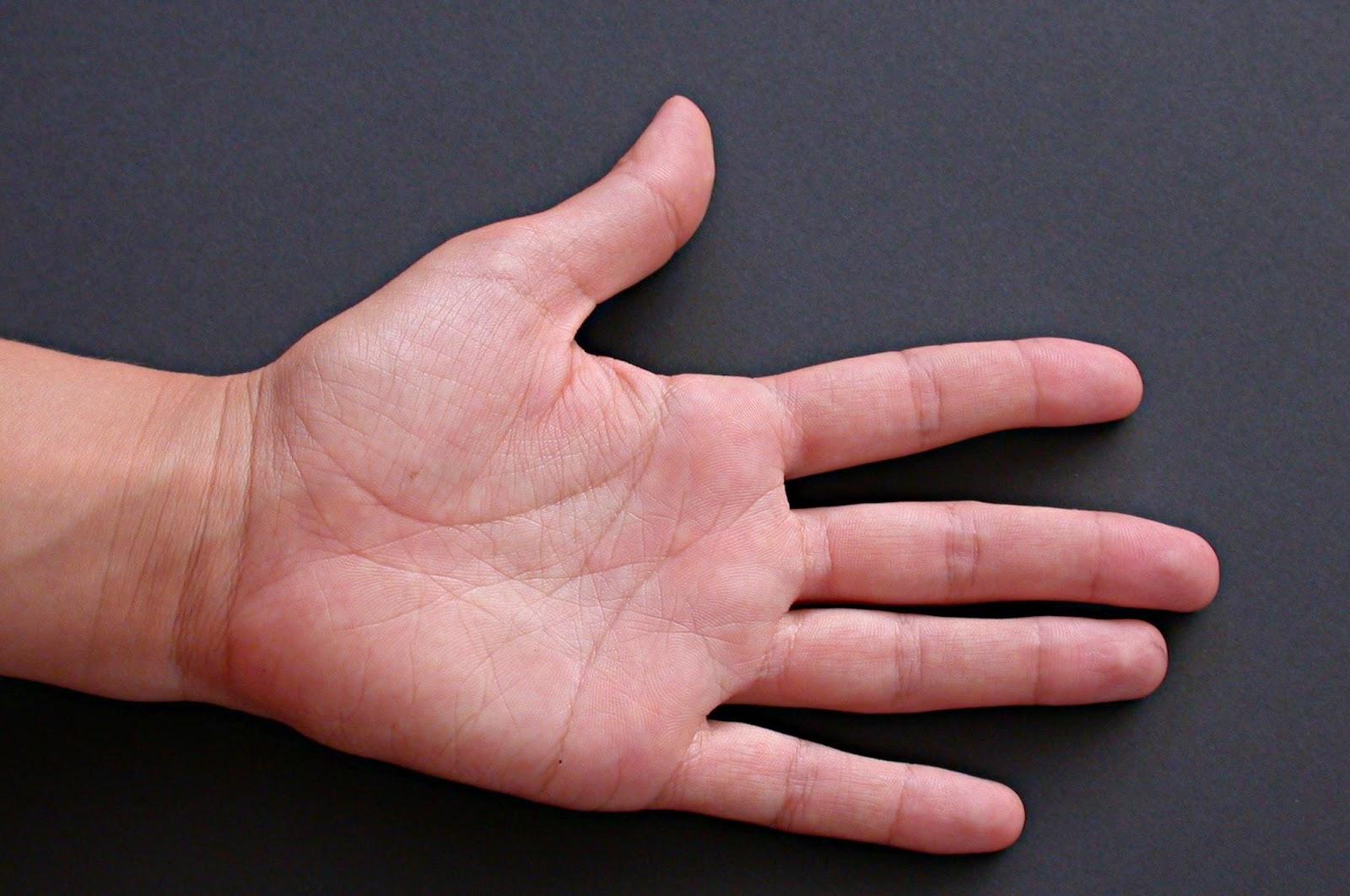 El tamaño de los dedos revela el grado de fidelidad