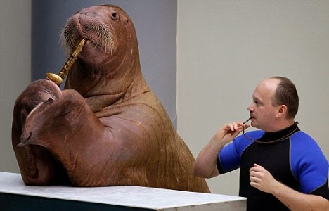 Walrus that can play horn - Sara