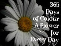 365 Days of Colour and Inspiration