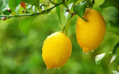 Khasiat Buah Lemon Bagi Kesehatan