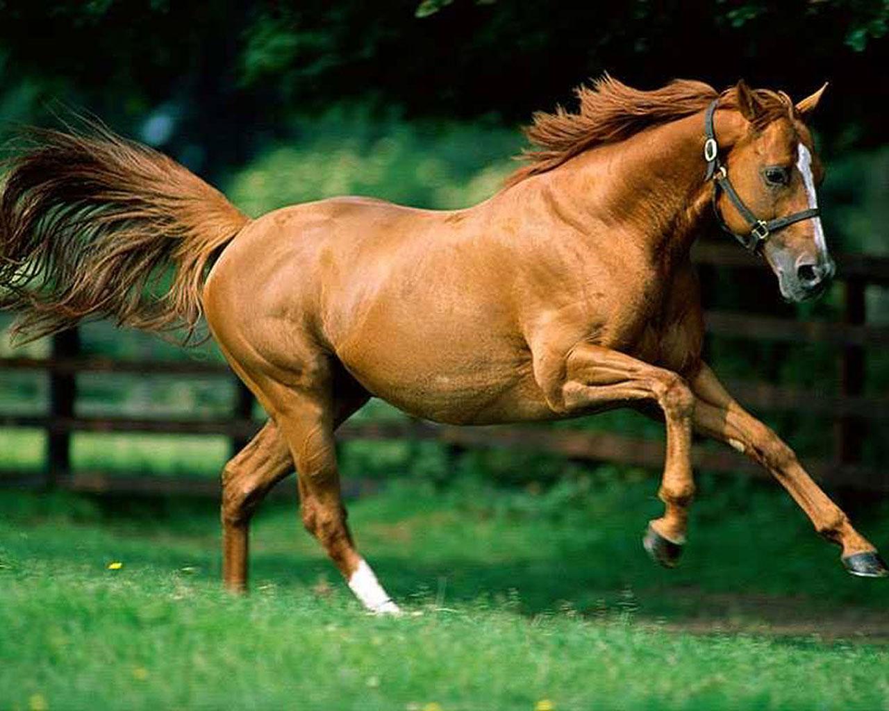 tierra los animales se mueven gracias a sus patas algunos animales ...