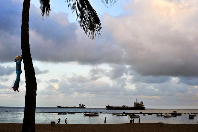 17. Las Teresitas Beach, tree pause, Tenerife