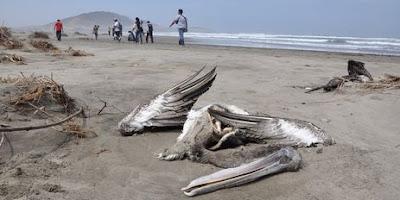 http://4.bp.blogspot.com/-ZhxhJs4msYY/T6_89K14JII/AAAAAAAACsY/M6GET6-CEwQ/s400/oiseaux+morts+chili.jpg