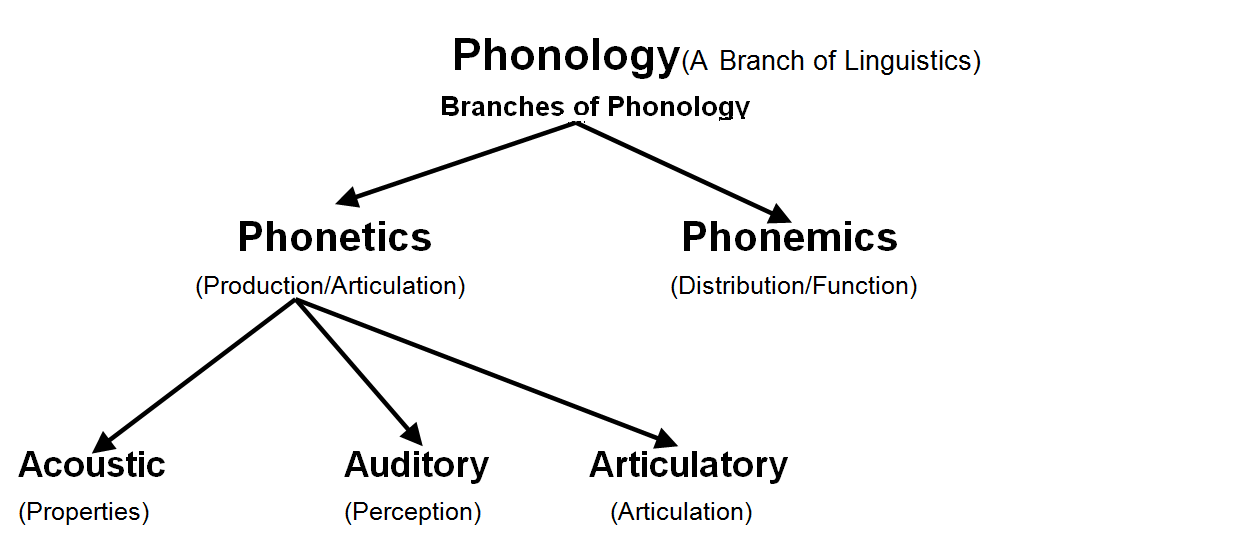 an analysis of phonetics and phonology
