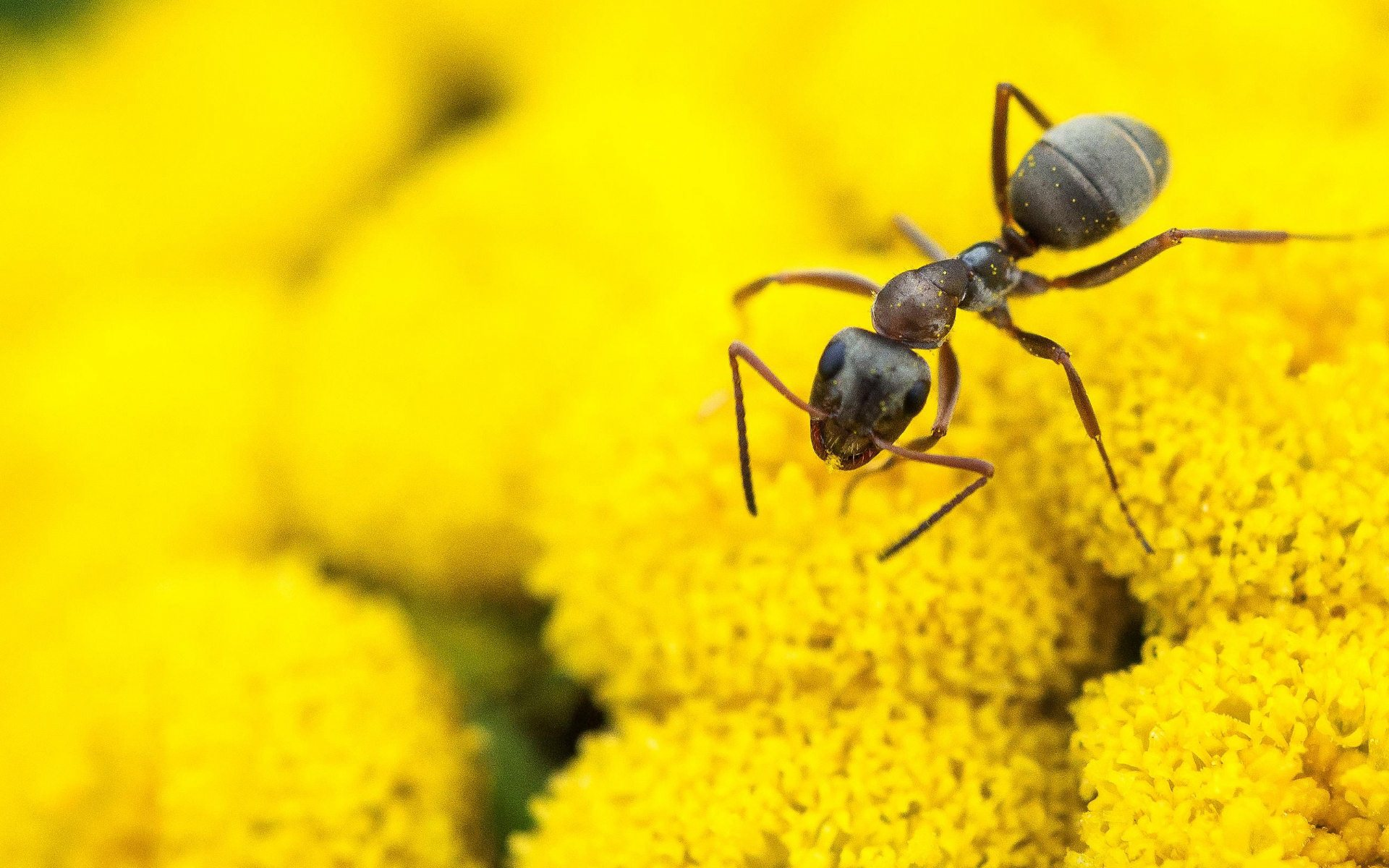 Insect Macro Wallpapers