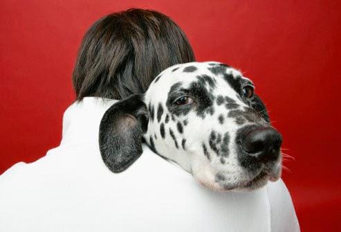 el perro mas adecuado para ti