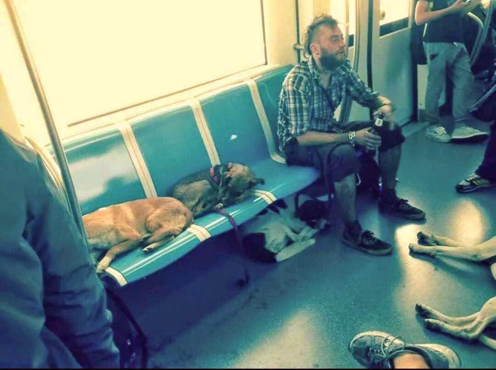 Che vita da cani...