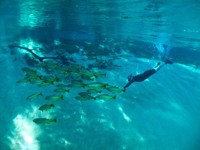 Snorkeling no Rio da Prata e Olho D'Água