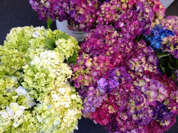 NowThisLife.com - Elk Grove Farmer's Market - hydrangeas