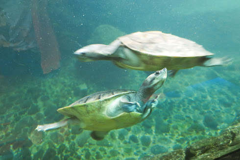 Turtles in Jurong Bird Park