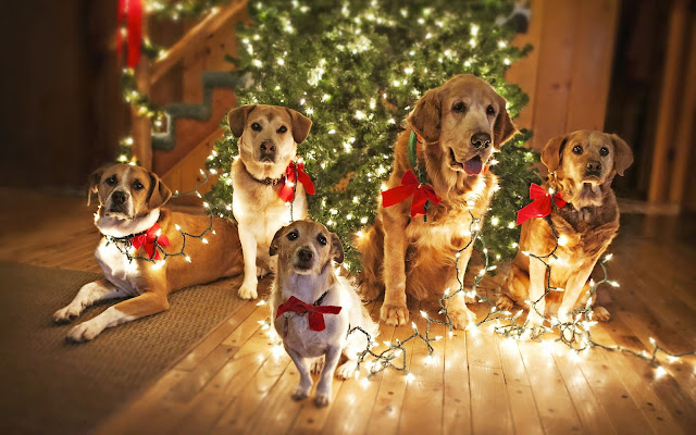 Dog wallpaper christmas tree lights wooden floor