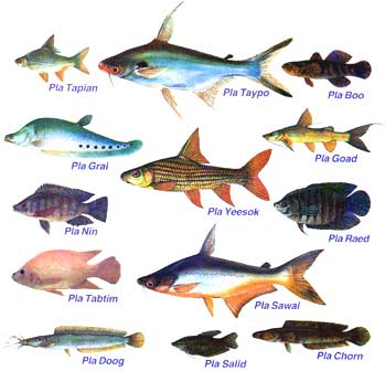 March 2012 river fish for All fish names