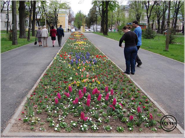 Brăila Grădina Mare Rond de flori