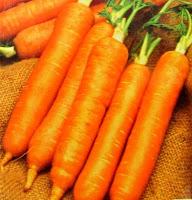 zanahoria, cenoura, carrot