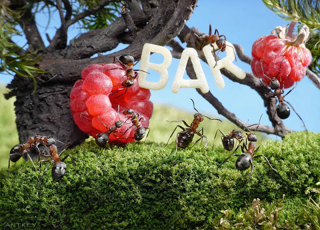 Real Ants in Fantasy Landscapes by Andrey Pavlov.