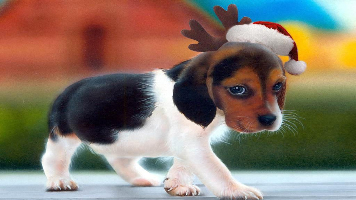 christmas puppy wallpaper - photo #1