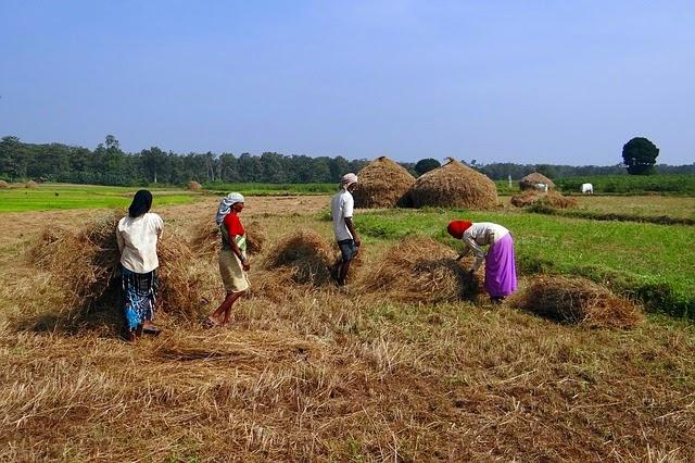 農作業の画像