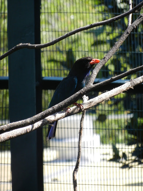 San Diego zoo aviary