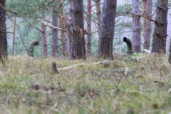 secreto debajo del bosque