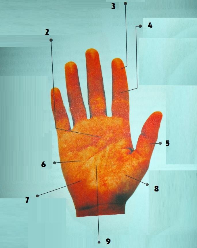 Các bộ phận quan trọng trong bàn tay cần xem xét