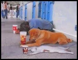 Amo, Perro y Gato pidiendo limosna.