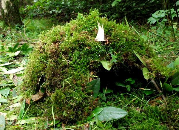 Wilderness Shelters from around the world
