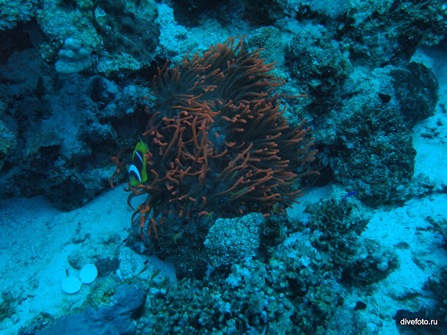 Красный коралл на глубине 20 метров без подсветки