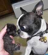 Dog meets kitten, funny dog, dog photos, dog and cat pics