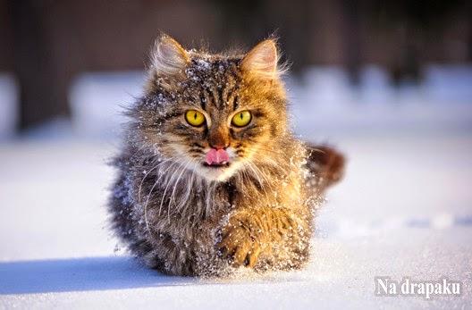 Kot wychodzący zimową porą