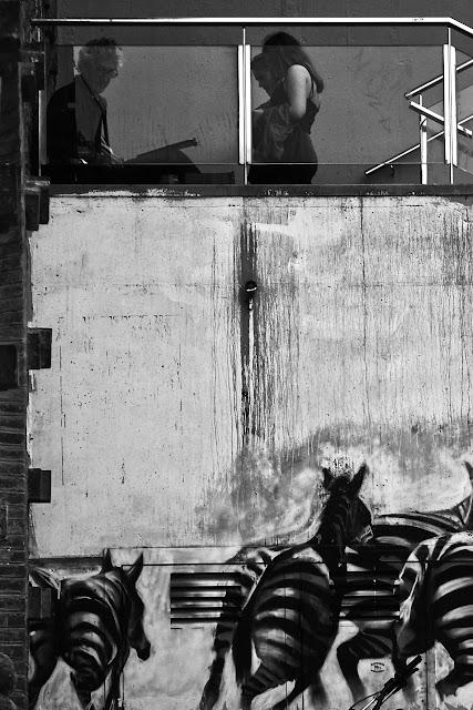 Cebras en la pared ByN