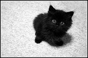 . se têm a superstição de que cruzar com um gato preto, é sinal de azar.