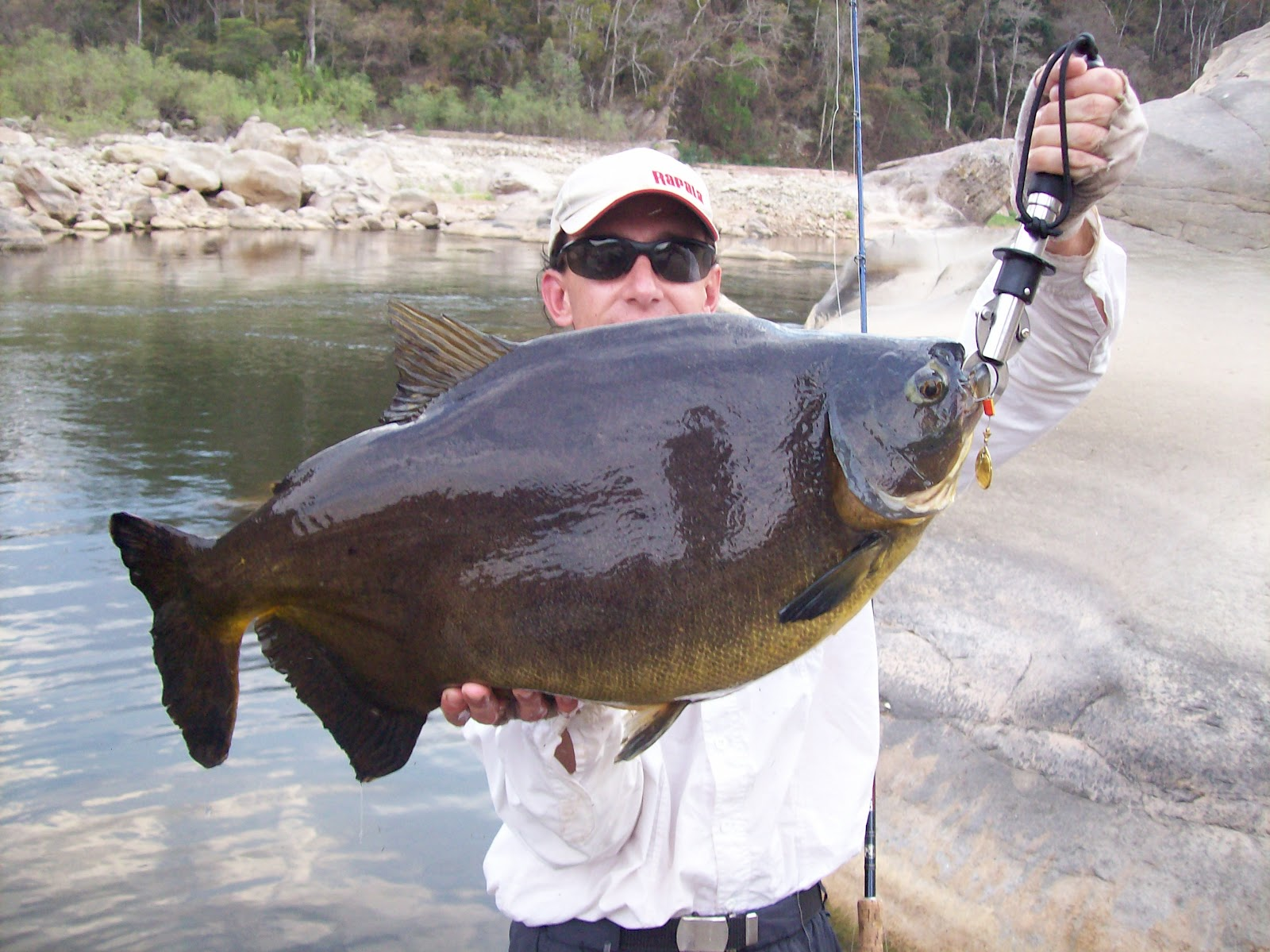 Biggest fish ever caught for World largest fish