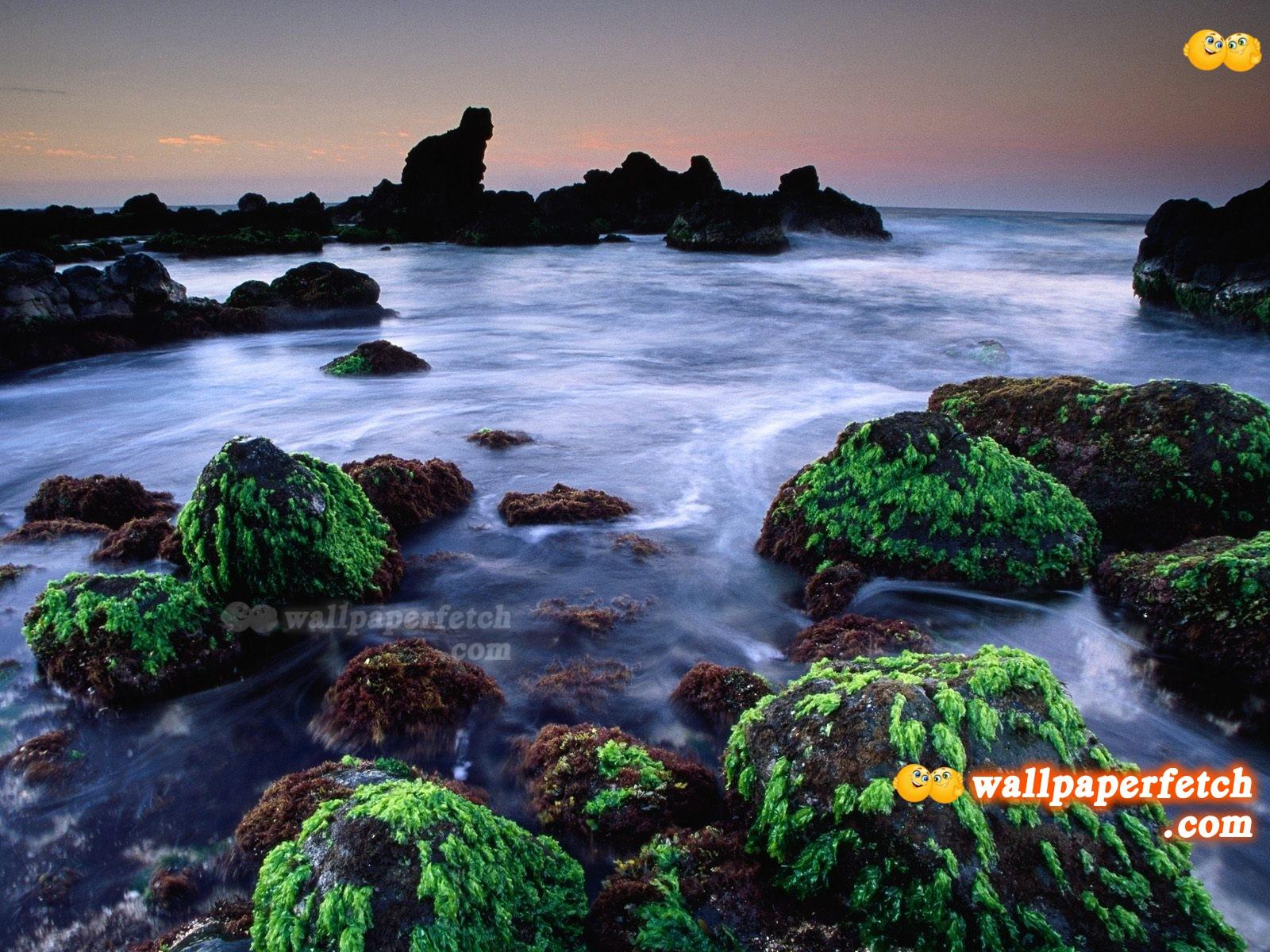 http://4.bp.blogspot.com/-ZndWyTN7HnM/T6QH5iC7-rI/AAAAAAAALEw/CNyrmp3OBgE/s1600/Hookipa_Seascape_Maui_Hawaii_Wallpaper_1600x1200_wallpaperhere.jpg
