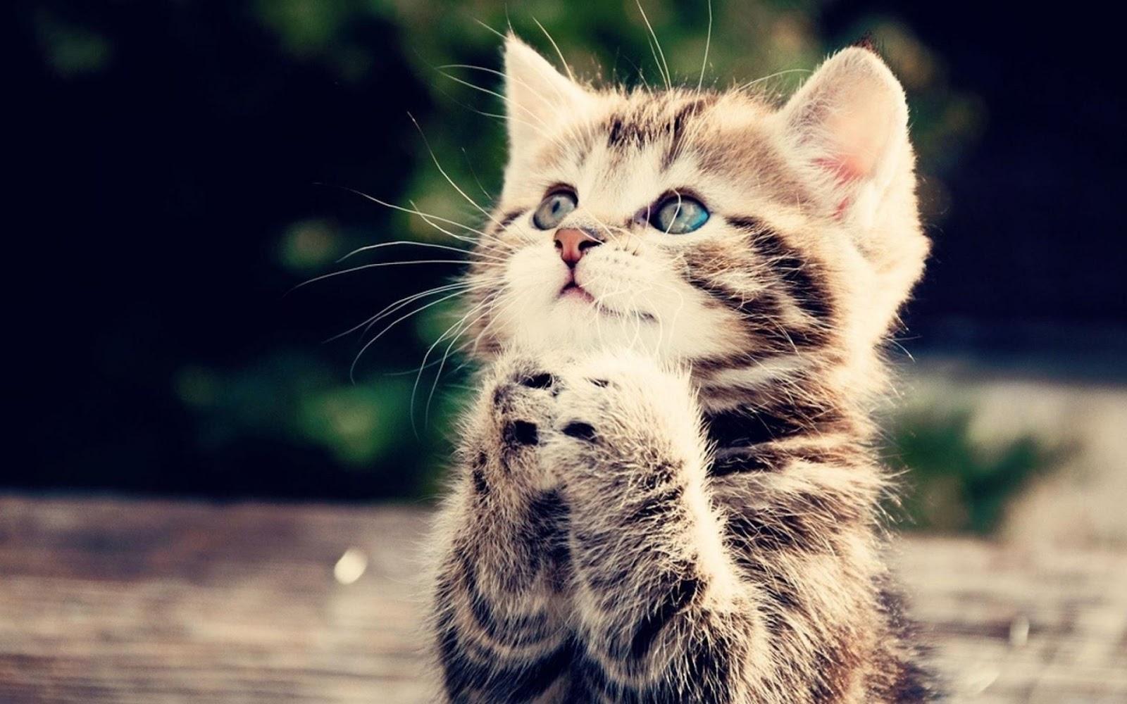 Kitten Begging