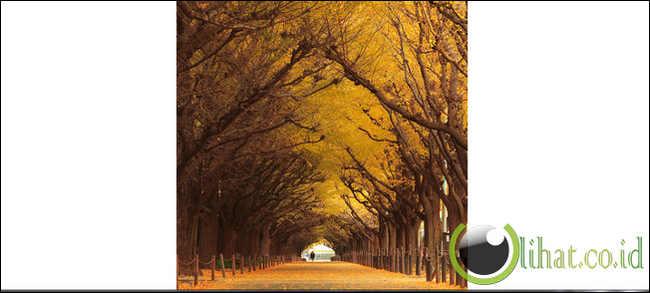 Adalah pohon yang paling dihormati dalam budaya jepang. enam pohon