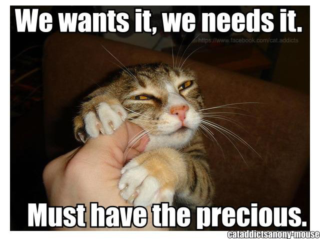 photography lolcats we wants it we needs it