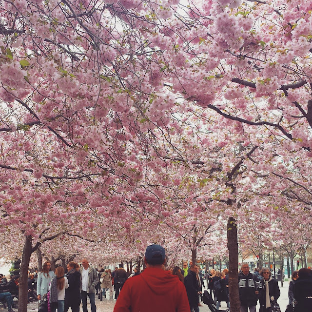 Kungsträdgården cherry blossoms, Stockholm, Sweden  |  2015: The year that was on afeathery*nest  |  http://afeatherynest.com