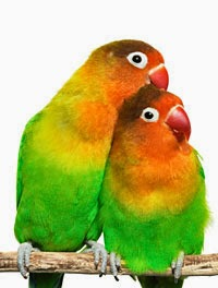 Gambar Cara Merawat Burung Cantik