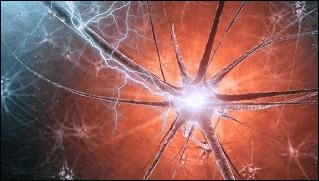 كيف تولد أدمغتنا الكهرباء؟