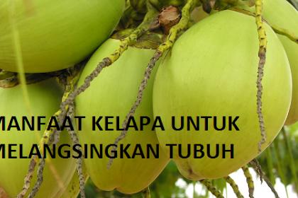 Manfaat Buah Kelapa Untuk Melangsingkan Tubuh