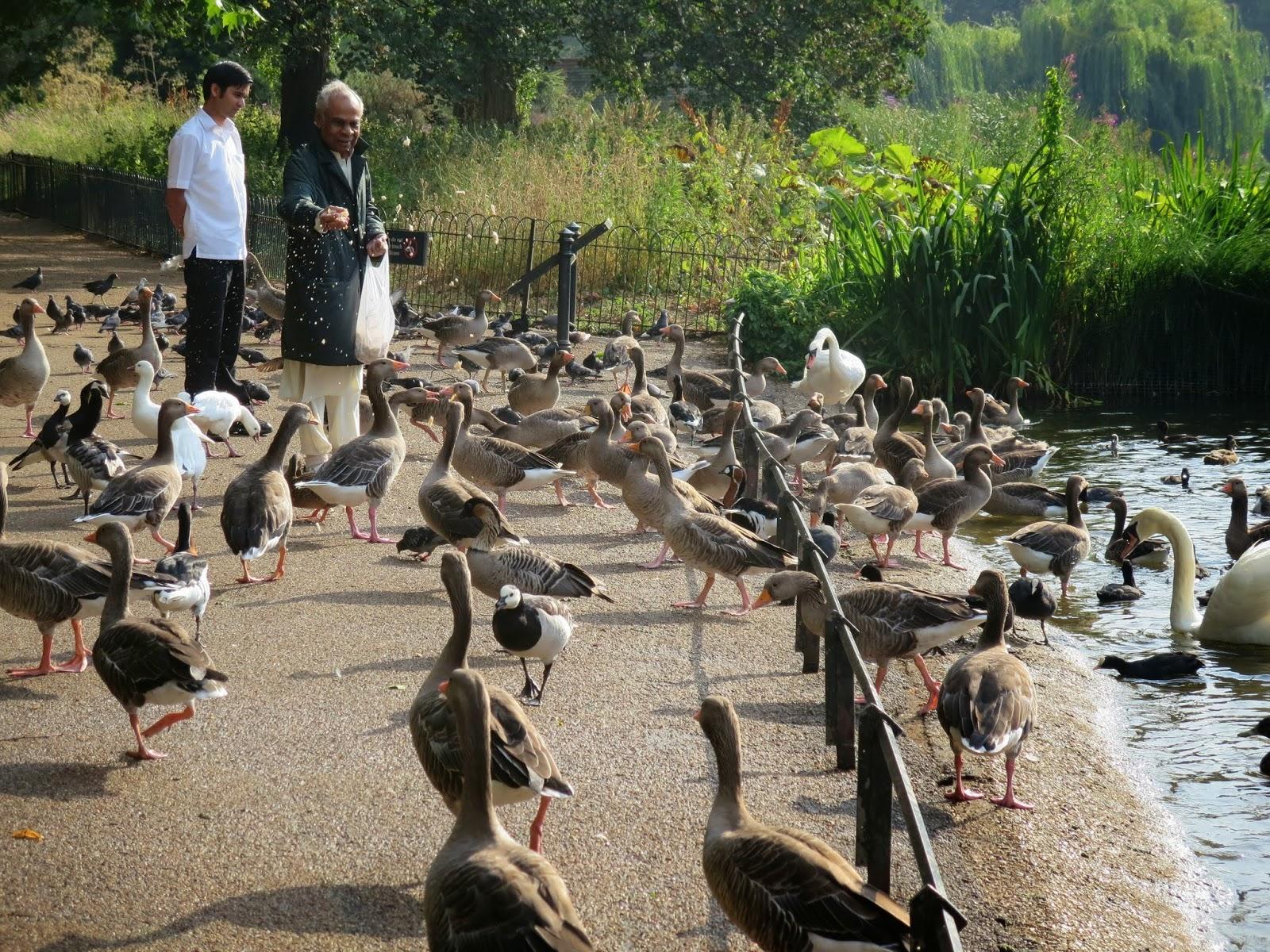 London - Feeding the Birds