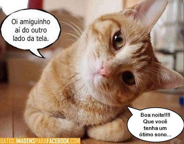 Suficiente Amo Gatos: BOA NOITE SS48
