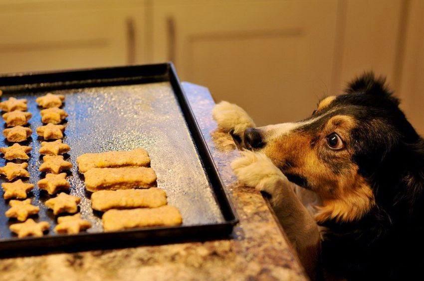 Receta Para perros Comida Para Cachorros
