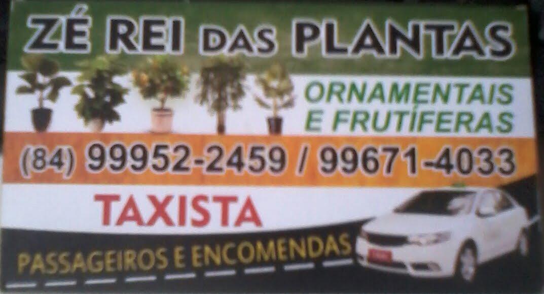 ZÉ REI DAS PLANTAS