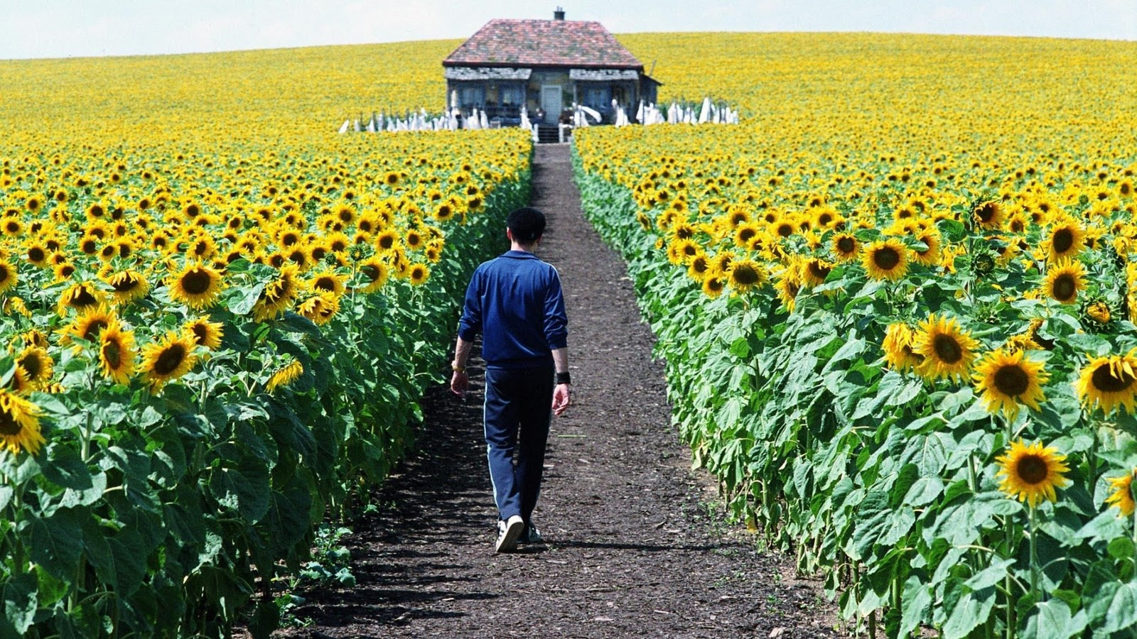 Everything is illuminated movie times