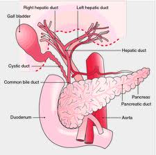 How Do I cessation Gallbladder distress