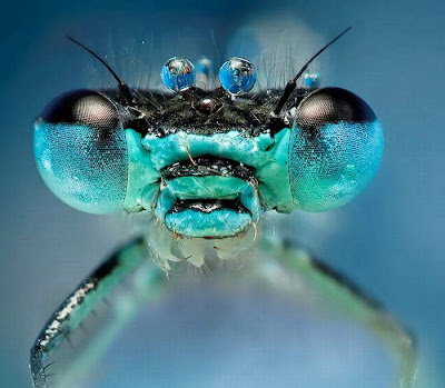 Nature Wallpaper insects head